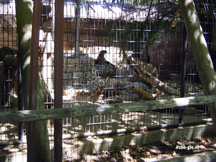 2006 Verblijf Chinese tijger