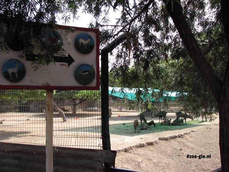 2008 Deer enclosure