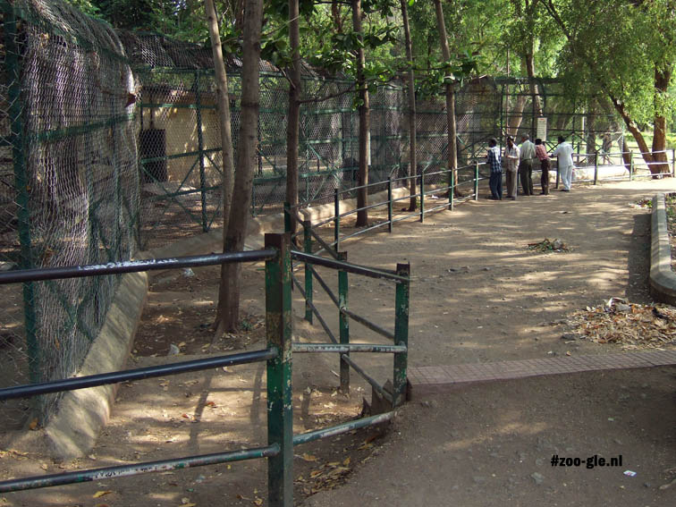 2008 Hier woont een beer naast een zieke aap