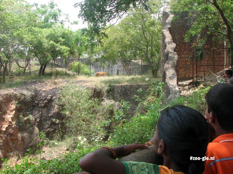 2008 Blik op de tijgers