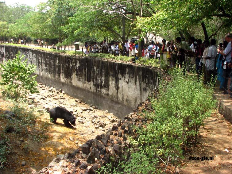 2008 Zwarte beer heeft bekijks