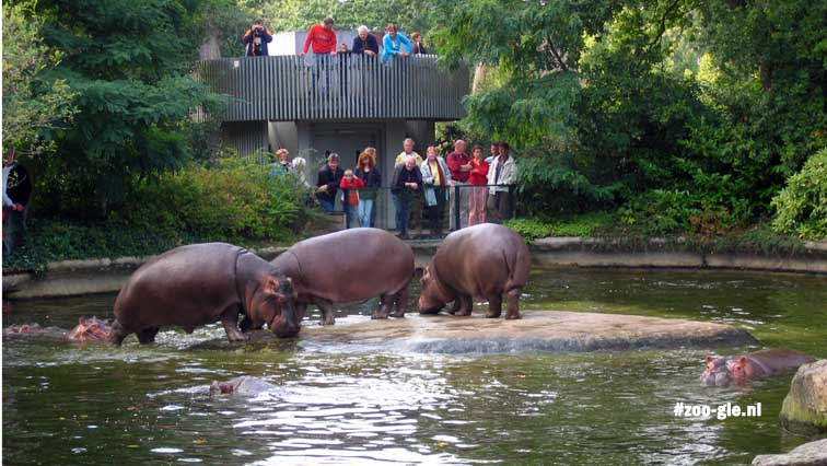 2005 Hippos in the continent of Africa