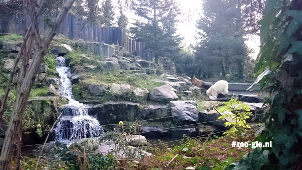 2015 Naturalistic polar bear enclosure