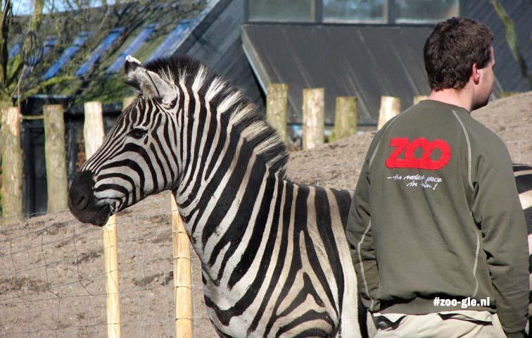 2009 Verzorger bij zebra