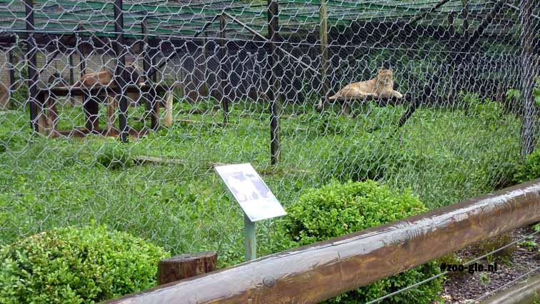 2010 Buitenverblijf leeuwen