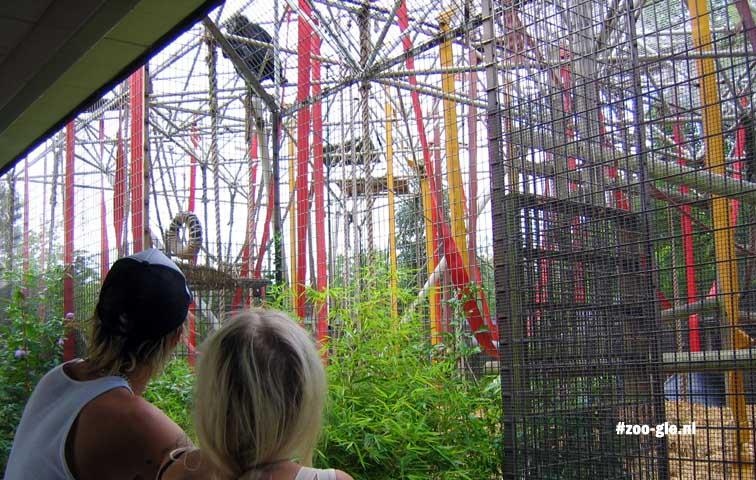 2005 Bij de gorilla's