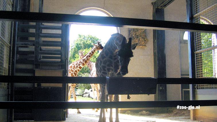 2005 Giraffenverblijf van Decimus Burton van 1836-7