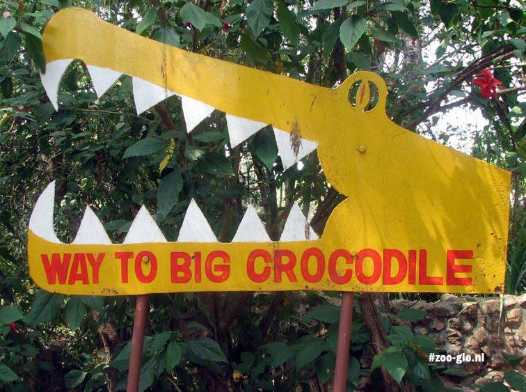 2008 Way to big crocodile
