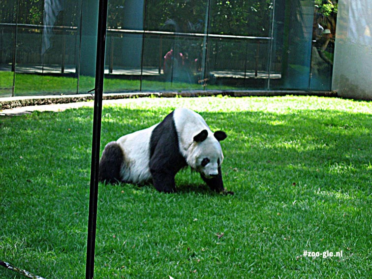 2004 A giant panda in Mexico City