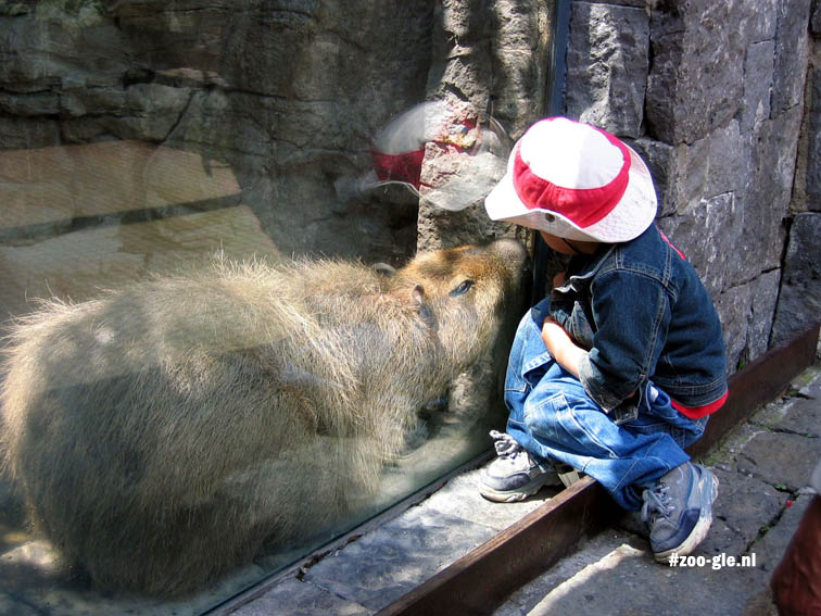 2004 Capybara and boy