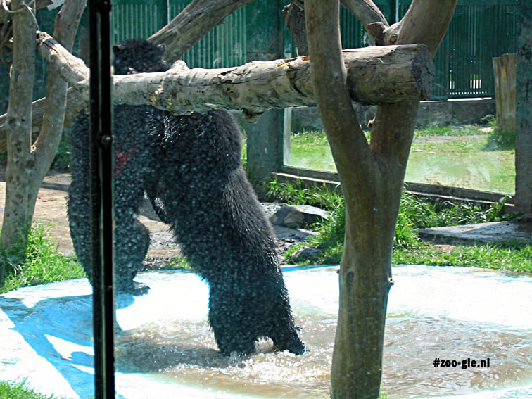 2004  Playful bears in the zoo