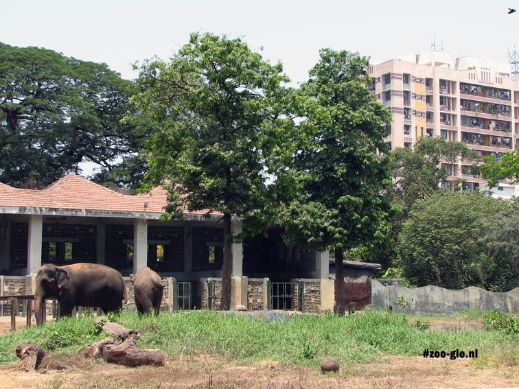 2008 Elephants