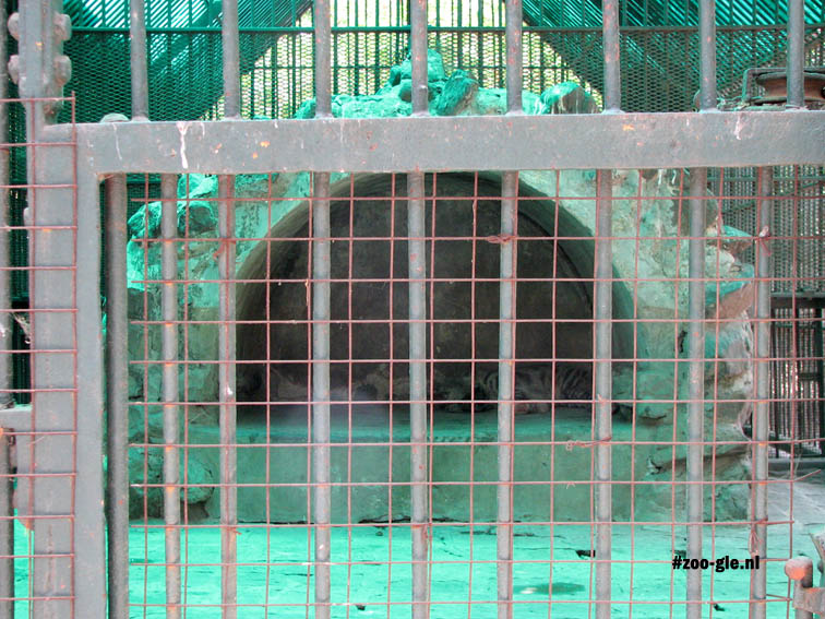 2008 Hyena enclosure