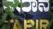 2008 Tapir sign