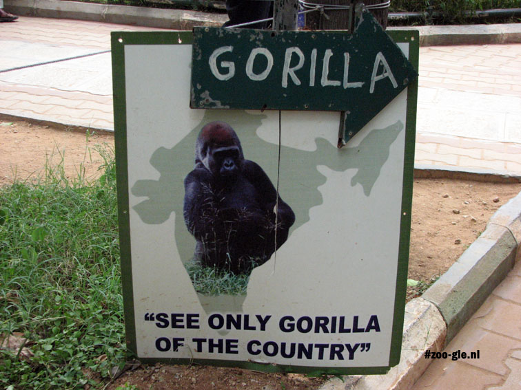 2008 The only gorilla in India