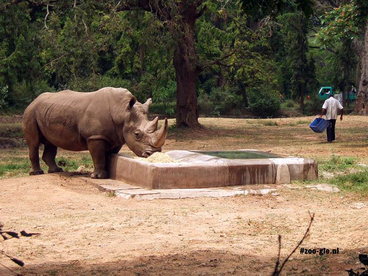 2008 Zookeeper feeding rhino