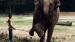 2008 Verzorger en olifant