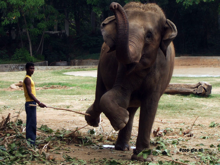 2008 Elephant and elephant keeper