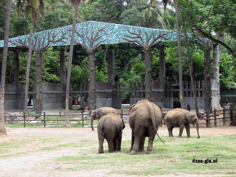 2008 More elephants