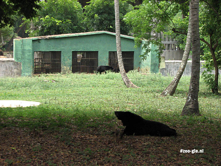 2008 Asian black bear enclosure