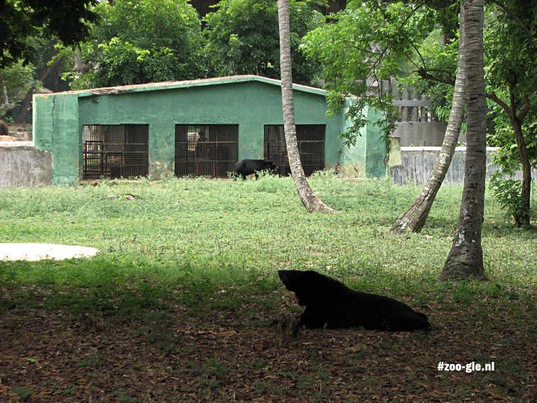 2008 Verblijf Aziatische beren
