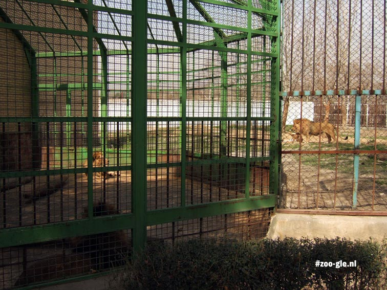 2009 Outdoor lion cages