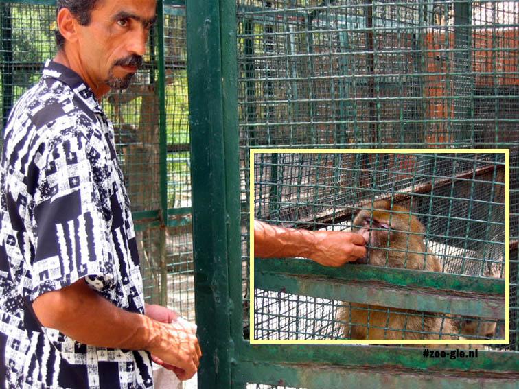 2005 Laat aap uit hand eten