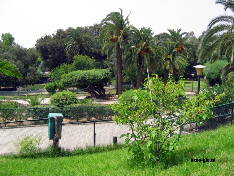 2005 De dierentuin in juli