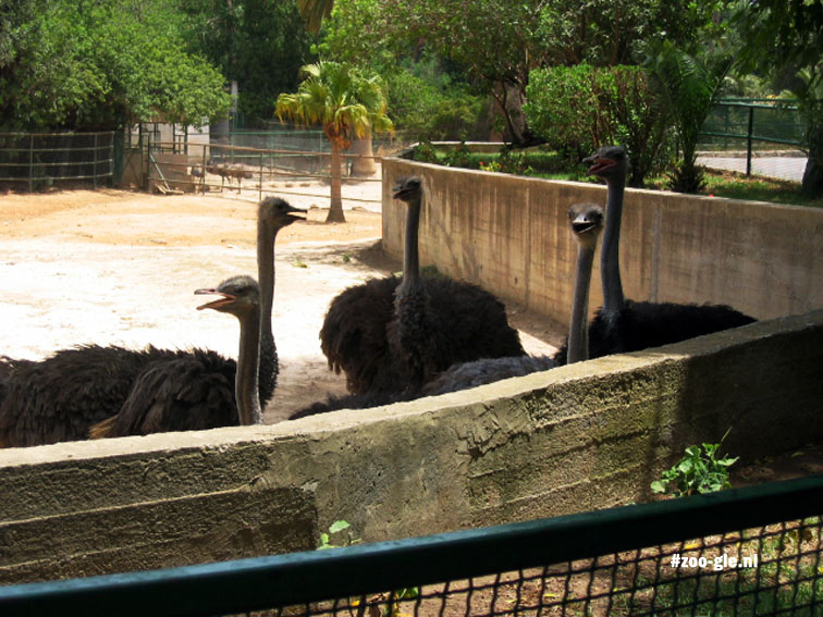 2005 Emus are open mouth breathing