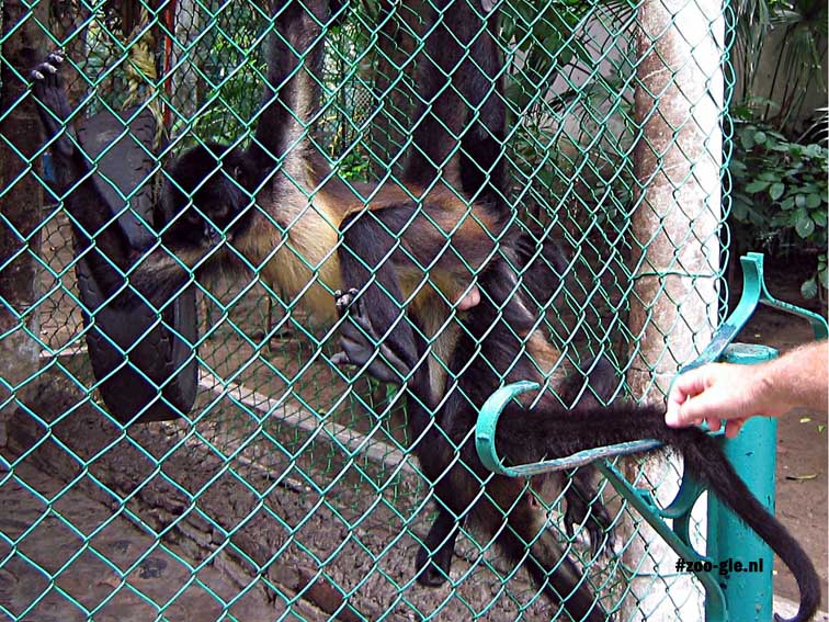 2004 A monkey lets you stroke him