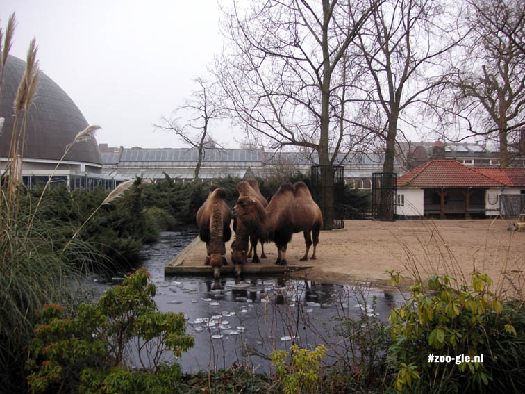 Planetarium, stad en kamelenveld