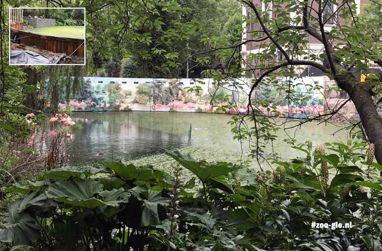 July 2017 Renovation to the flamingo pond with viewing holes so walkers could look in