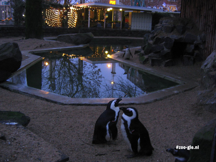 2006 Two penguins in December