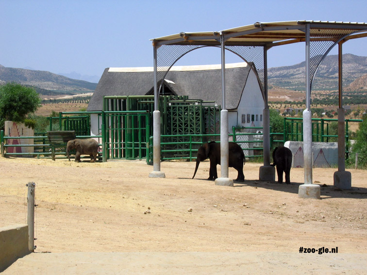 2005 Elephants