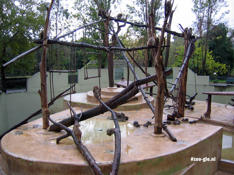 2005 Japanse makakenrots