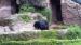2005 En de grotto van de zwarte beer