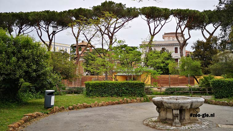 2019 De Vico's garden: banteng enclosure and  umbrella pines in front of the Via Saverio Mercadante