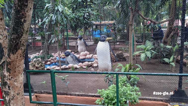2017 To teach the zoo visitors something about penguins