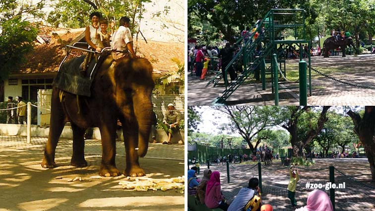 1996 vs 2017: our ride on an elephant seems institutionalized