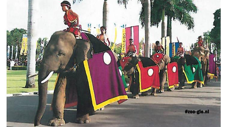 1991 Elephant parade Surabaya Zoo