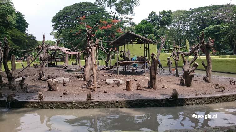 2017 Monkey island