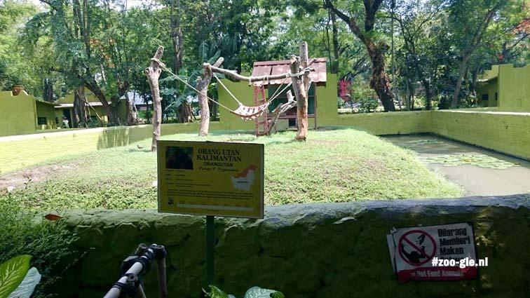2017 Gedragsverrijking bij de orang-oetans