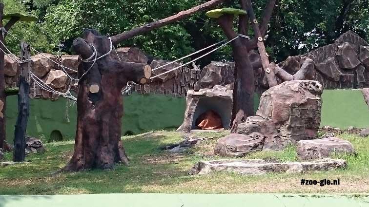 2017 Deze orang-oetan weet dat verrijking natuurlijk gedrag stimuleert
