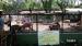 2017 Veel Javaanse herten en sambars