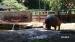2017 Het nijlpaardenverblijf