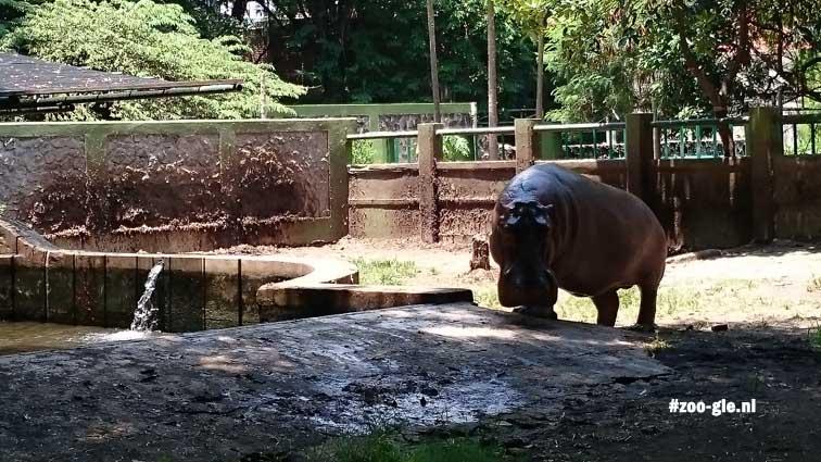 2017 Hippo enclosure