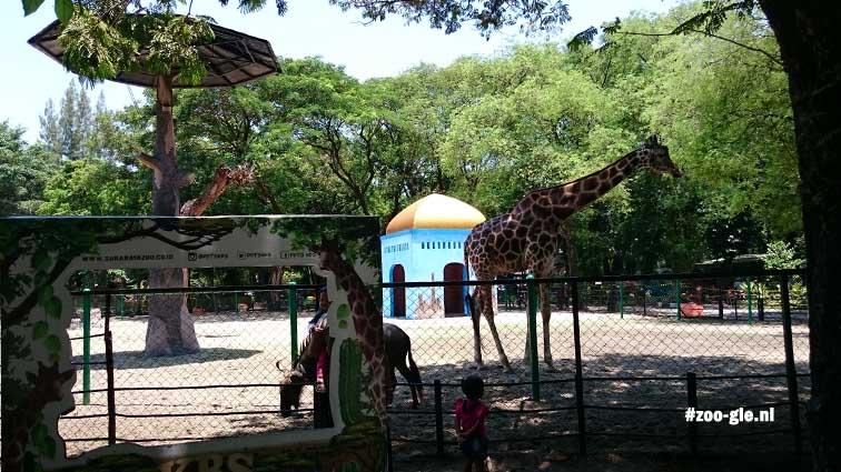 2017 Giraffe enclosure