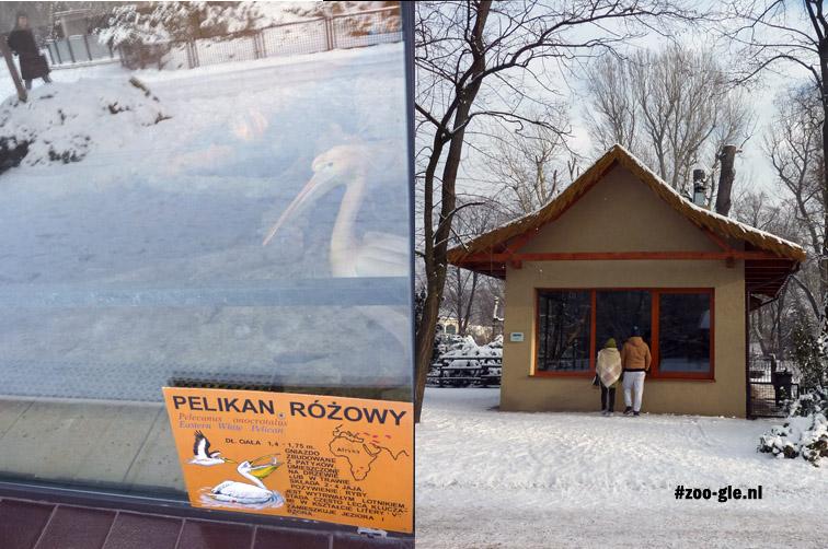 2016 Winter: pelikanen achter glas en de gibbons in 'n vakantiehuisje