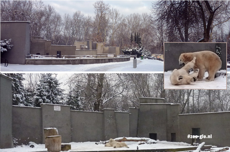 2016 Hoe vaak zie je nu ijsberen in een kubistisch verblijf?!