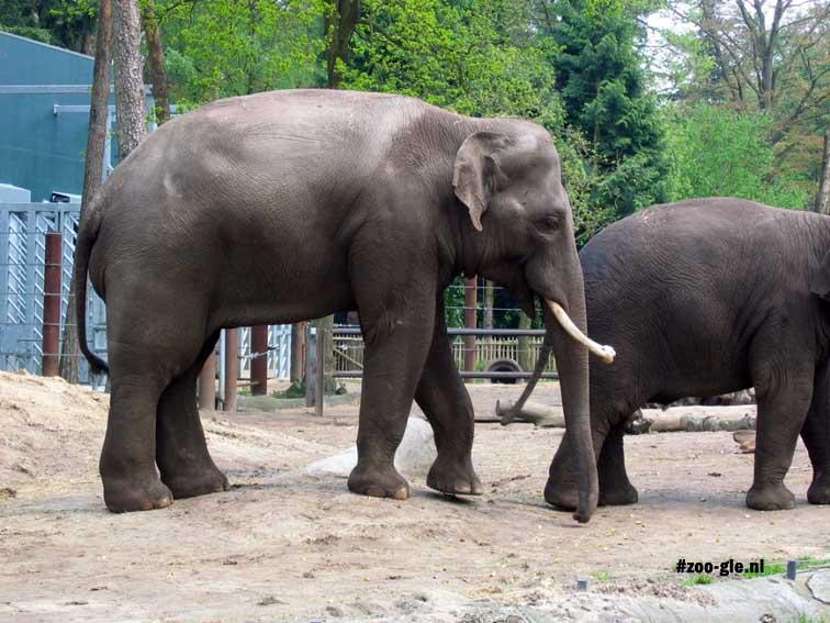 2005 Bull elephant Sammy
